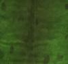 grøn ,pr. stk.