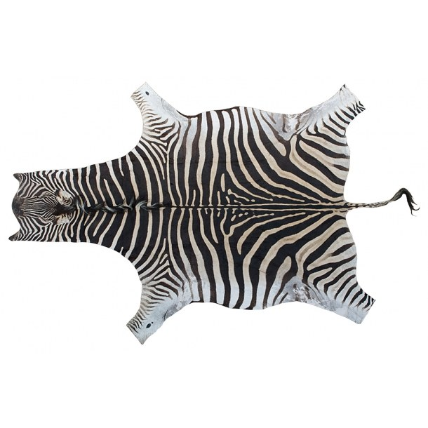 Zebra skind